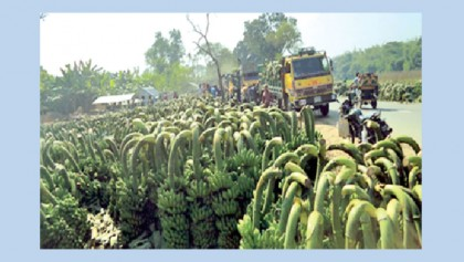 Illegal banana bazaar on busy Moheshpur road
