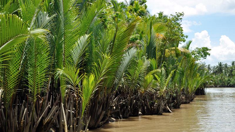 Forest dept starts assessing damages to Sundarbans