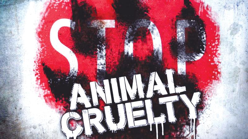 Animal feels pain too