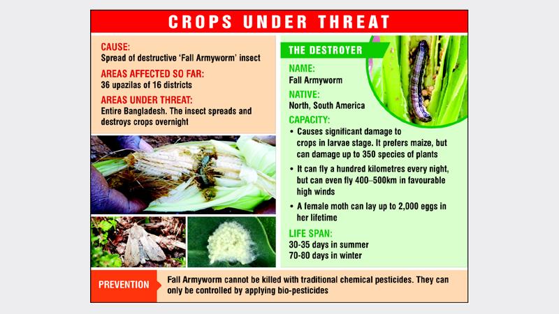 Armyworm set to swarm croplands