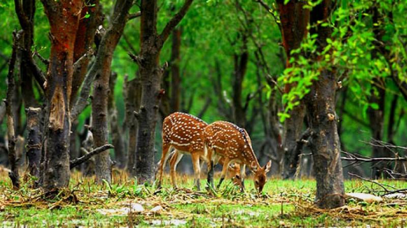 2 poachers held with venison, legs in Bagerhat