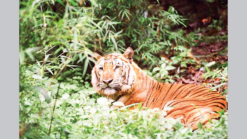 Protect Bangladesh's biodiversity