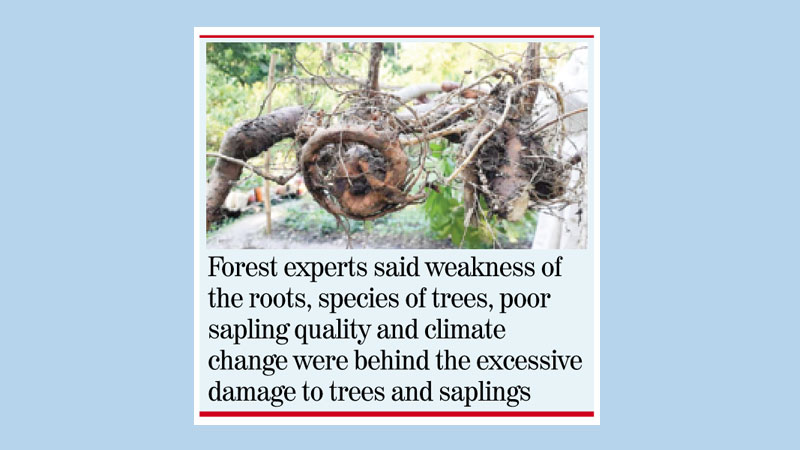 'Bulbul' fury in Bagerhat; 192,915 trees, saplings damaged