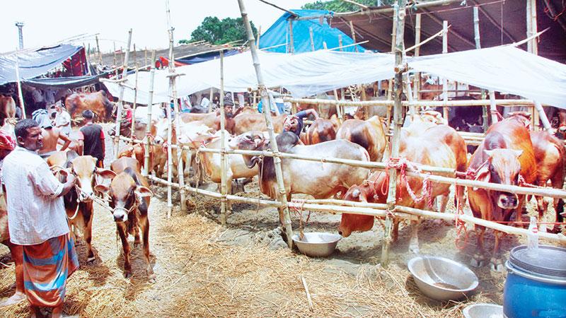 Cattle markets start gaining momentum