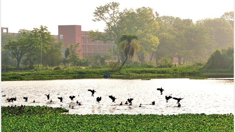 Concern over migratory birds leaving RU campus