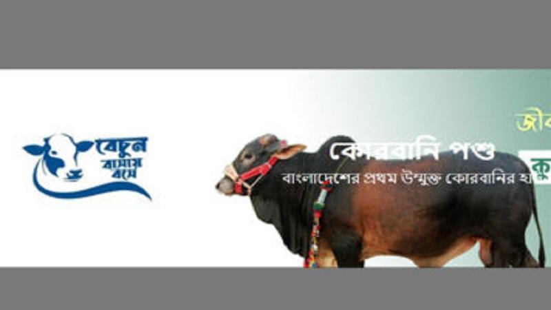 Govt opens digital market for sacrificial animals