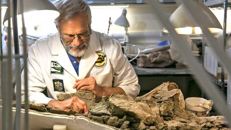 Unique Armored Dinosaur Discovered in Utah