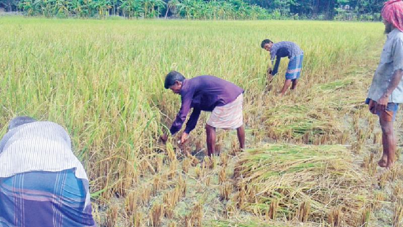 Farmers worried despite good yield