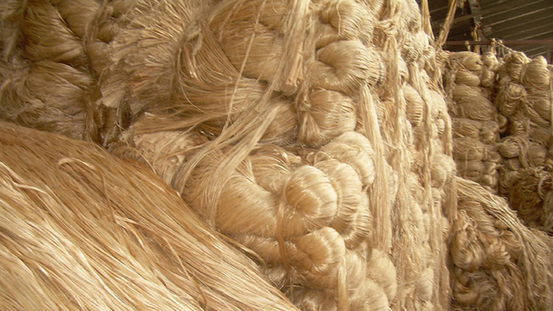 Tk 1000cr fund to be created to boost jute output