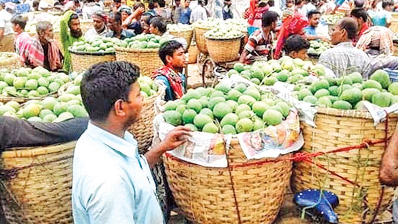 Mango business gains momentum in Rajshahi, Chapainawabganj