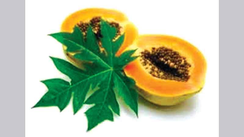 Papaya leaves juice and platelet count in dengue