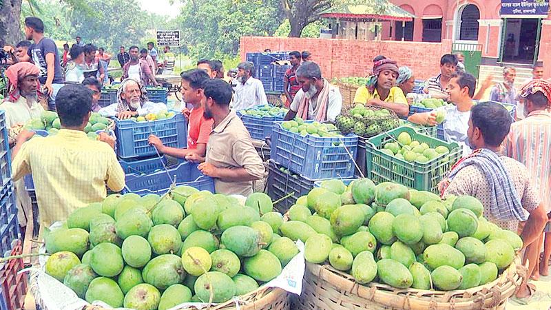 Mango business gains momentum
