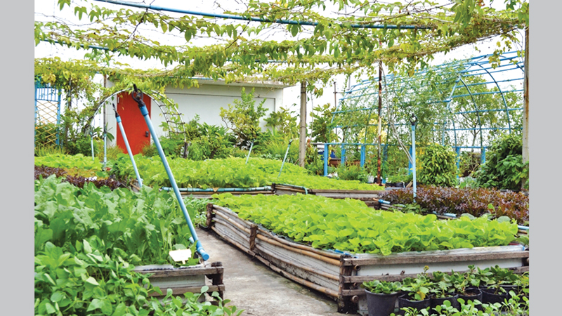 Superieur Rooftop Gardening
