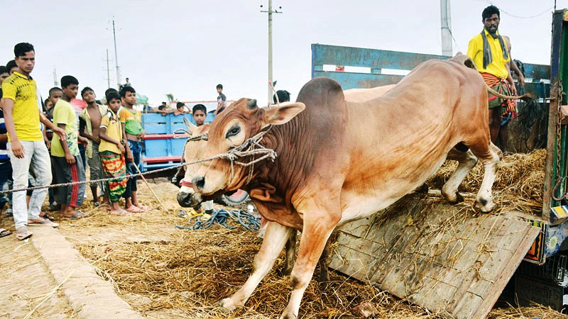 Govt to employ 1200 teams to check sacrificial animals' health