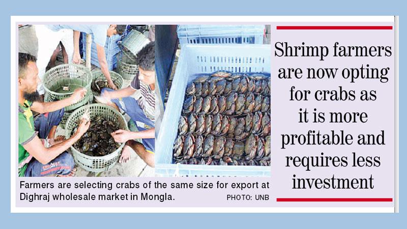 Crab farming gaining popularity in Khulna among farmers