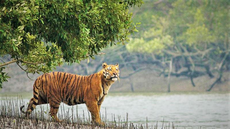 Sundarbans tourism: Now focus on automation to improve services