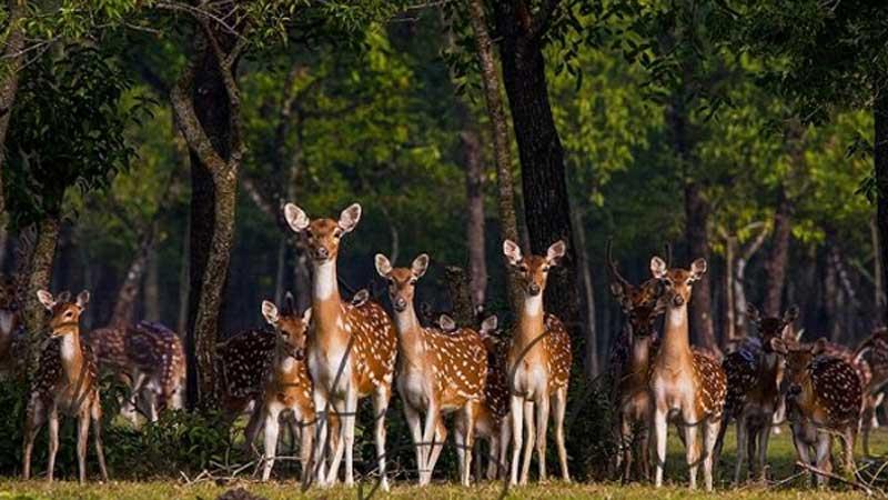 Protect the biodiversity of the Sundarbans