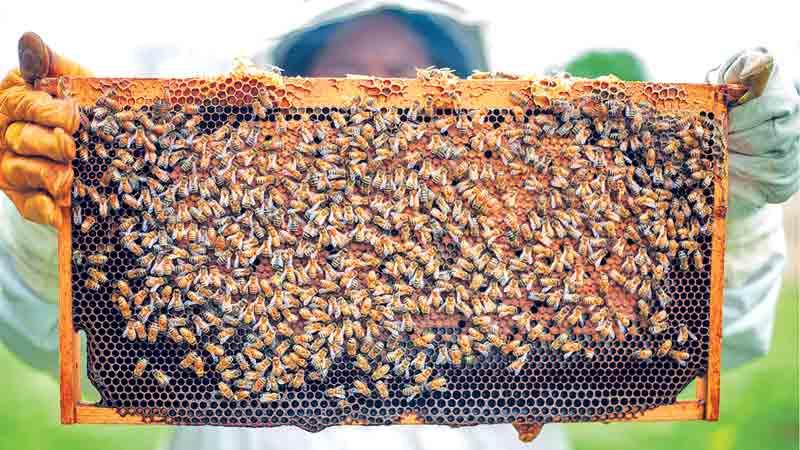 Economic growth through apiculture
