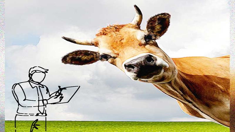 A modern essay on 'The cow'