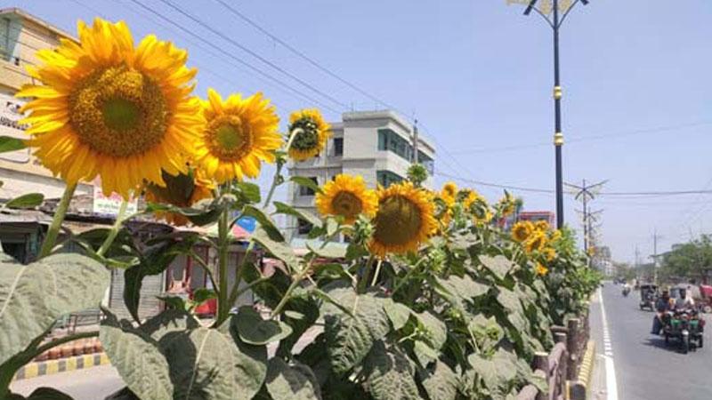 Road gets decorative look in Rajshahi city