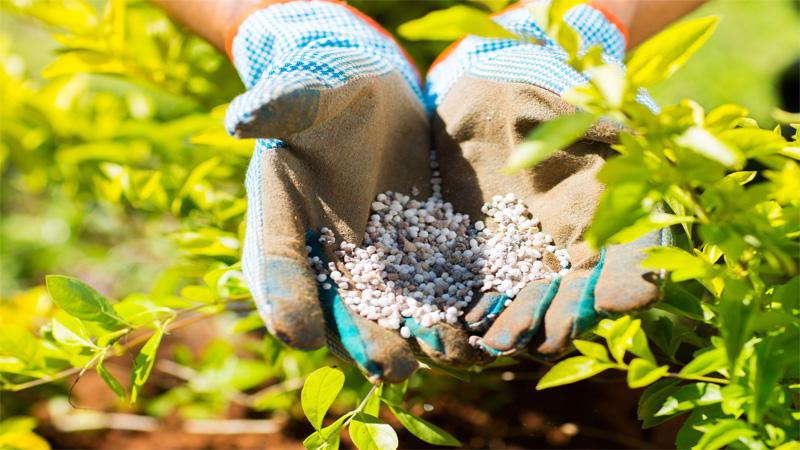 Fertiliser-N harmful for environment, warn experts