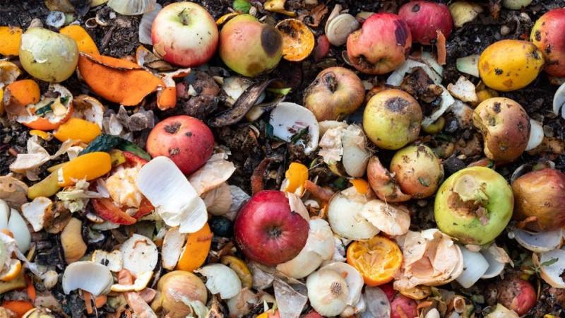 Food waste: Amount thrown away totals 900 million tonnes