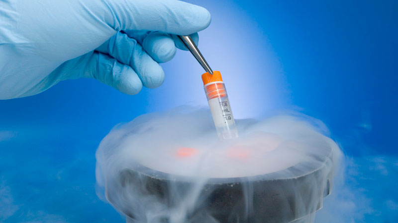 Frozen embryos effective in IVF treatment: Study