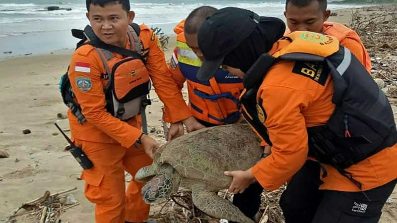 'All lives matter': Indonesia saves tsunami-stranded turtles
