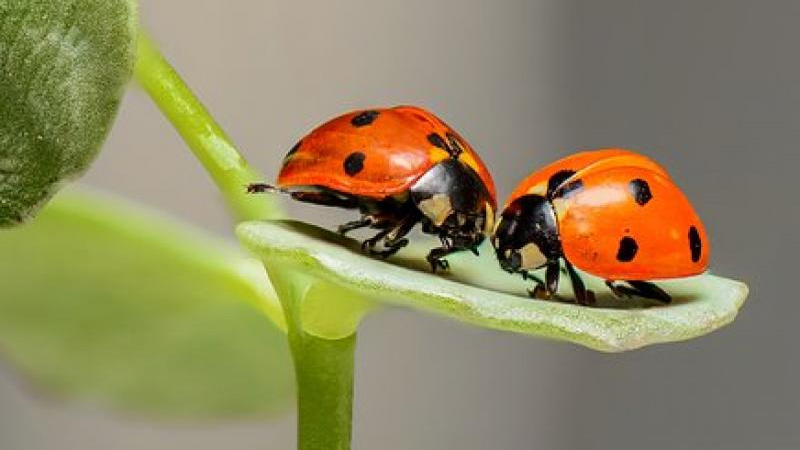 Global warming causing extensive decline of insects