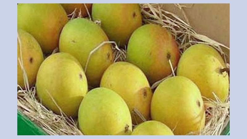 Rajshahi may miss mango export target | theindependentbd com
