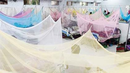 Dengue: 254 more hospitalized, no death reported