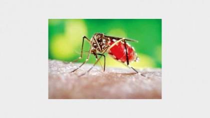 4 more die of dengue