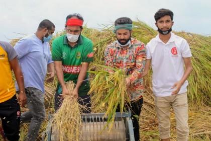 Chhatra League helps Daudkandi farmers harvest paddy