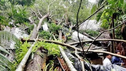 Crops worth Tk 242 crore damaged in Barishal