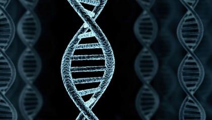 DNA study reveals new fertility clue