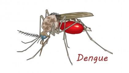 Dengue takes teenage girl's life in Ctg