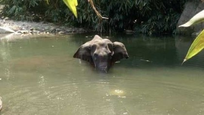 Killing of pregnant wild elephant in Kerala triggered mass outrage in India