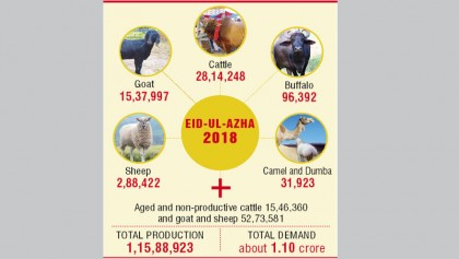 High feed prices hamper fattening of cows