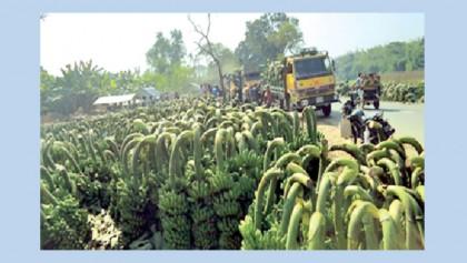 Illegal banana bazaar on busy Moheshpur road
