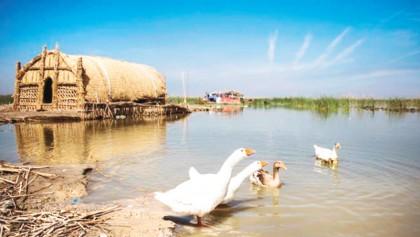 Iraqis turn to budding ecotourism to save marshes