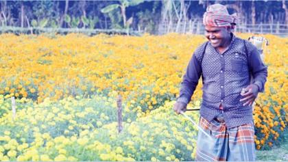 Jhenidah flower farmers eye Tk 2cr profit marking Valentine's Day