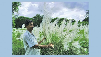 'Kashphul' brings money for farmers