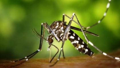 Climate change prompts vector-borne diseases