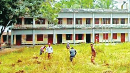 School playground used for growing rice