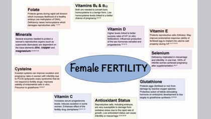 Women's fertility: Contributing factors