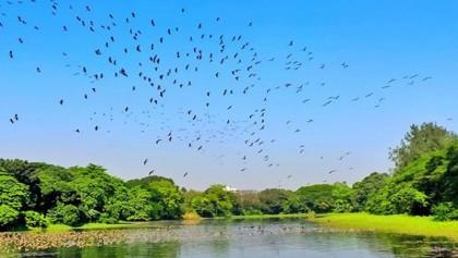 Migratory birds arrive earlier at Jahangirnagar University lakes this year