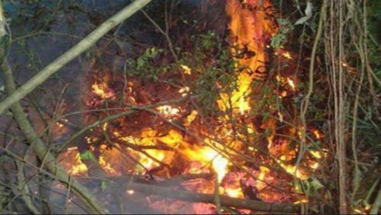 Fire completely extinguished: Forest dept