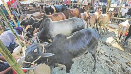 Delta's rage jeopardizes Eid festivity