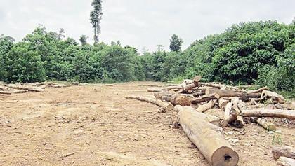 No let-up in deforestation