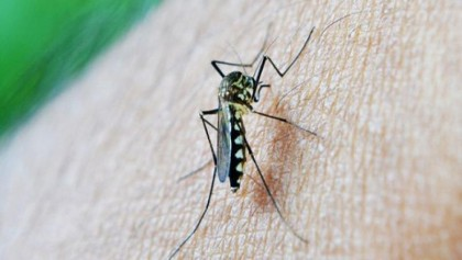 Anaemia can lead to cause of dengue